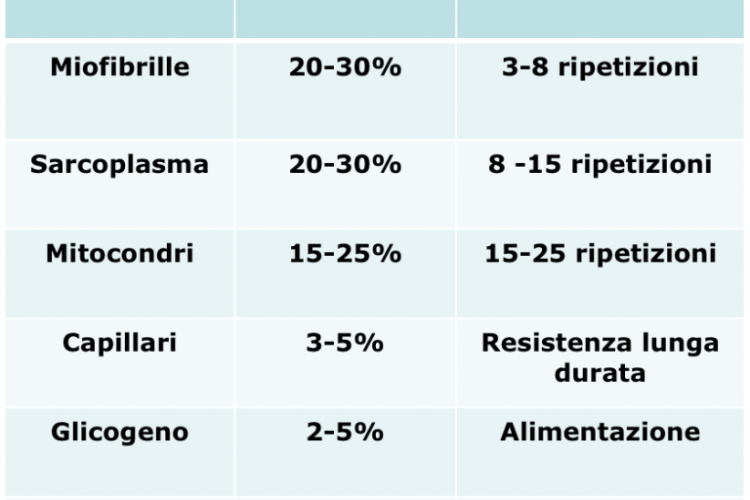 calisthenics-per-fare-massa-2